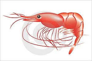 Shrimp Royalty Free Stock Photos - Image: 22698008