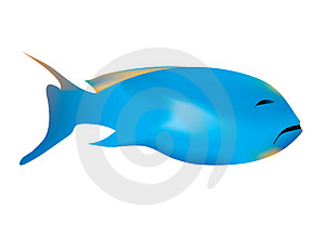 Sad Fish Stock Photos - Image: 2278923