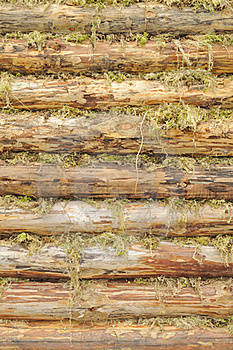 Wall Of Wood Logs Chinked With Moss Stock Photo - Image: 22706450