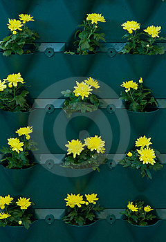Container For Plants Stock Photo - Image: 22739220