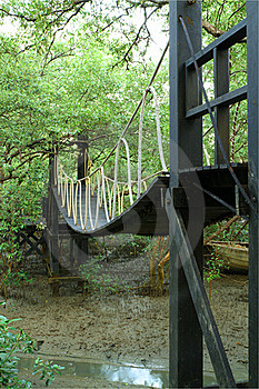 Bridge In Mangrove Conservation Center Royalty Free Stock Photo - Image: 22742995