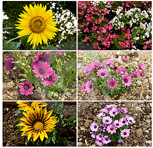 Flowers, Collage Royalty Free Stock Images - Image: 22750049