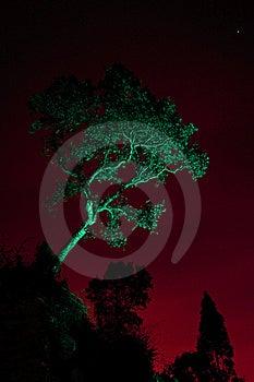 Solitary Tree Stock Photo - Image: 22751480