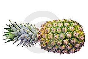 Pineapple Royalty Free Stock Photo - Image: 22752645