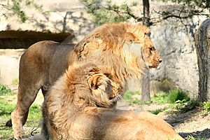 Lion And Lioness Stock Photo - Image: 2283470