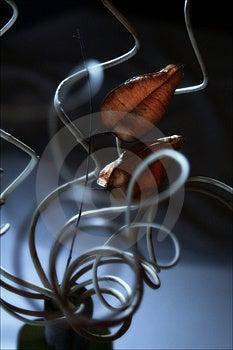 Spiral's Still Life Royalty Free Stock Image - Image: 2284716