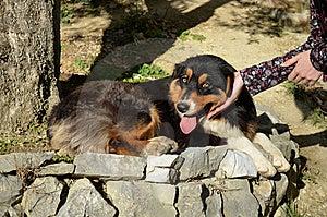Caressing The Dog Royalty Free Stock Photography - Image: 22813777