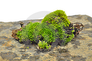 Green Moss On Stone Close-Up Royalty Free Stock Photography - Image: 22821457