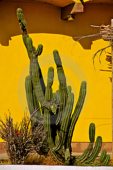 Cactus Royalty Free Stock Photography - Image: 22828607