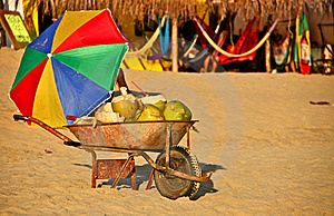 Fresh Coconuts For Sale At Mexican Beach Stock Images - Image: 22828654