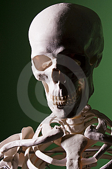 Sinister Skull In Half Shadow Stock Photography - Image: 22834632