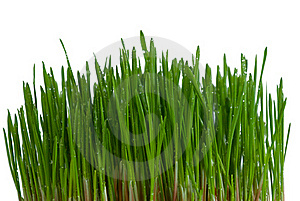 Bush Of Green Grass Royalty Free Stock Photography - Image: 22858647