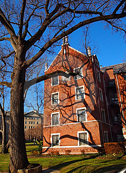 Tree Shadows On Brick Stock Photography - Image: 22888102