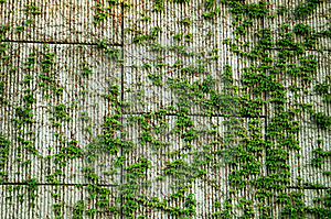 Block Wall & Vines Background Royalty Free Stock Photo - Image: 2296425