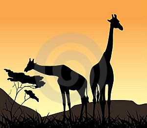Two Giraffes On A Background Of Sunset Stock Images - Image: 22910474