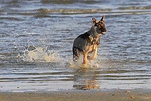 Dog At The Beach Royalty Free Stock Photos - Image: 22918928