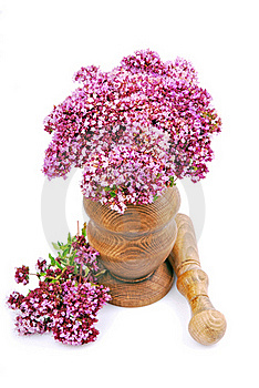 Oregano Herb Stock Image - Image: 22927491
