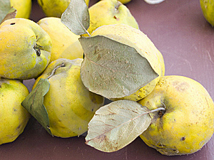 Rural Quince Royalty Free Stock Photos - Image: 22941118