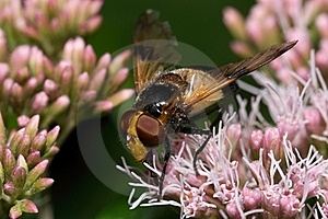 Fly Stock Image - Image: 22942861
