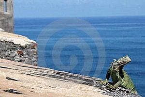 Green Iguana  Stock Image - Image: 22957071