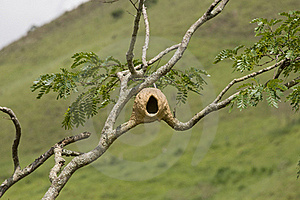 Bird Nest Stock Image - Image: 22972071