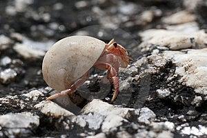 Hermit Crab Stock Photos - Image: 22977113