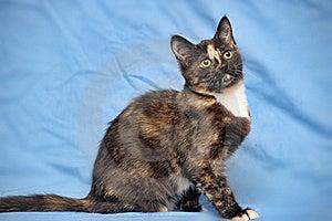 Tortoiseshell Cat Stock Image - Image: 22980281