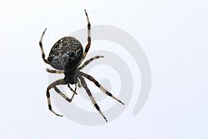 Fake Scary Eyes Royalty Free Stock Images - Image: 22983849