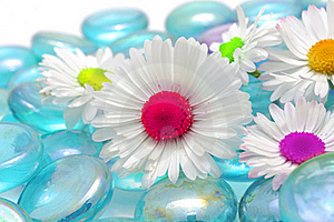 Beautiful Chamomiles With Colorful Middles Stock Photo - Image: 22990840