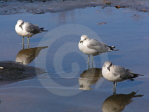 Tre uccelli Fotografie Stock Libere da Diritti