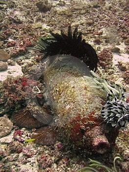 Tanque do mergulhador Fotografia de Stock Royalty Free