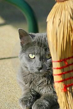 Cat watching Royalty Free Stock Photo