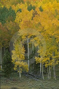 Autumn Scene 272-3-5 Free Stock Photography