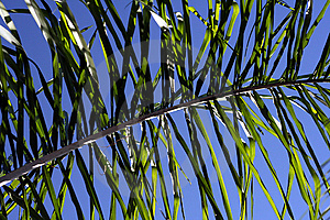 Palm Frond Stock Image