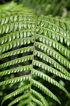 Leaf Texture Free Stock Photography