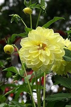 Yellow Daisy Free Stock Photo