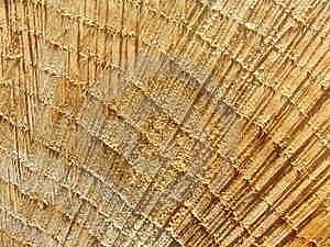 Woodgrain Close-up Royalty Free Stock Image