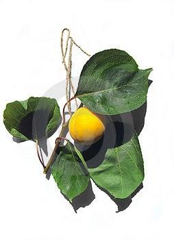 Smaklig apricote Arkivfoton