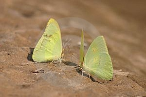 Butterflys On Beach Free Stock Image