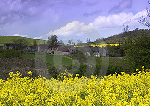 Rape Seed Village Free Stock Photos