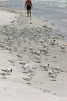 Gå med fåglarna Fotografering för Bildbyråer