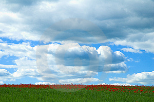 Poppy Field Free Stock Images