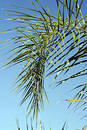 Palm frond Free Stock Image