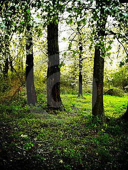Forest during sunny day 2 Royalty Free Stock Photos