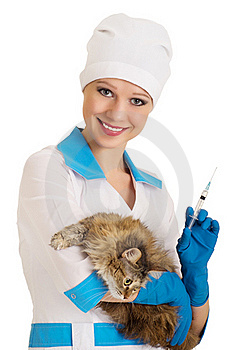 Vet Nurse Makes The Injection Of A Cat Royalty Free Stock Photos - Image: 23047378