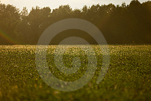 Field Of Gold And Green Stock Images - Image: 23050584