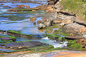 Green Algae On Rocky Ocean Shore Stock Photo - Image: 23052950
