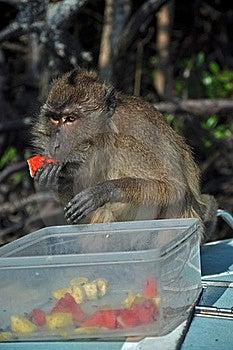 Eating Monkey, Thailand Stock Photos - Image: 23065143