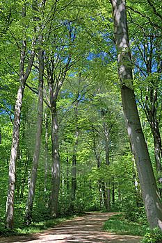 Spring Green Trees Stock Photo - Image: 23075860