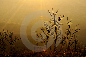 Dry Herbs On Sunset Stock Photography - Image: 23076072